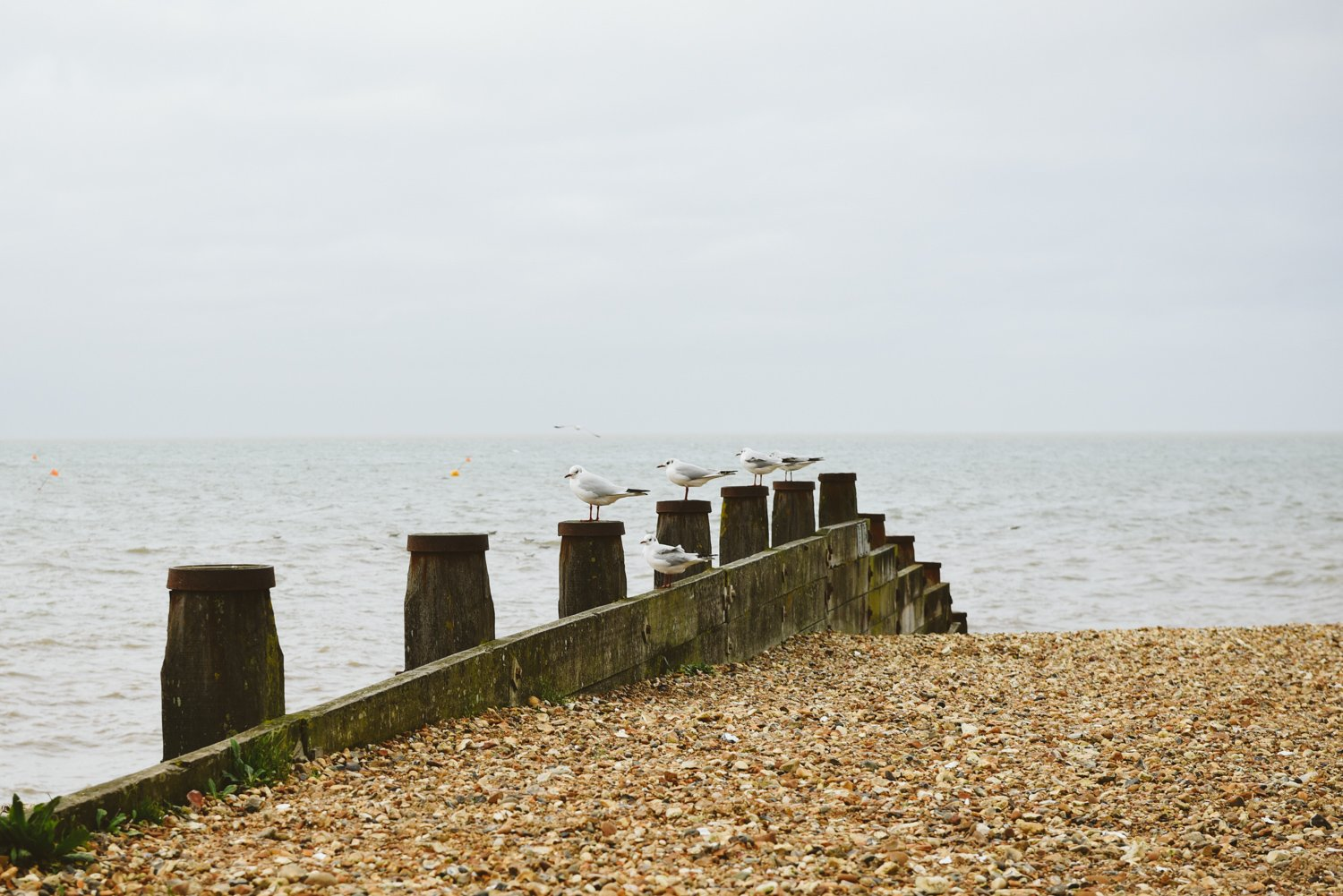 whitstable engagement photography kent wedding