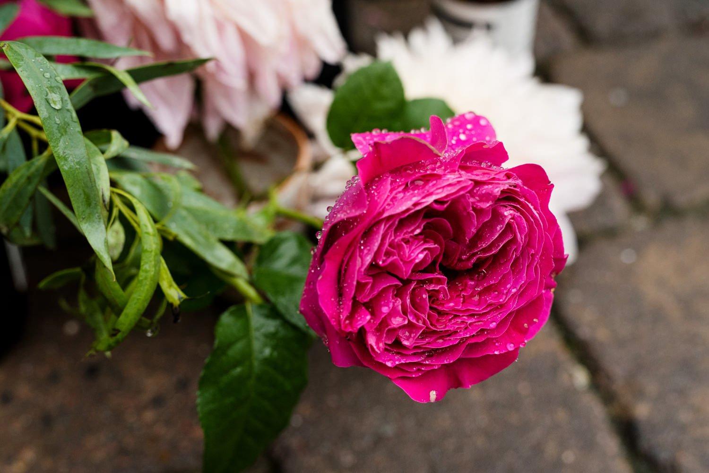 Hot pink rose at Tunnels Beach Wedding Photographer Devon