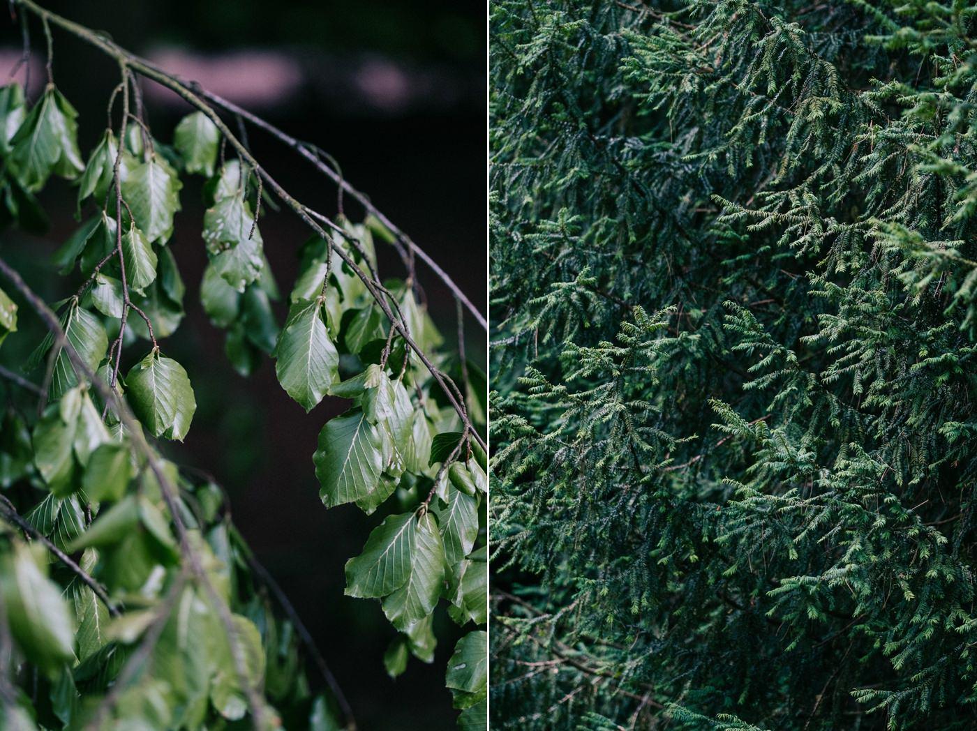 trees at Westonbirt Arboretum