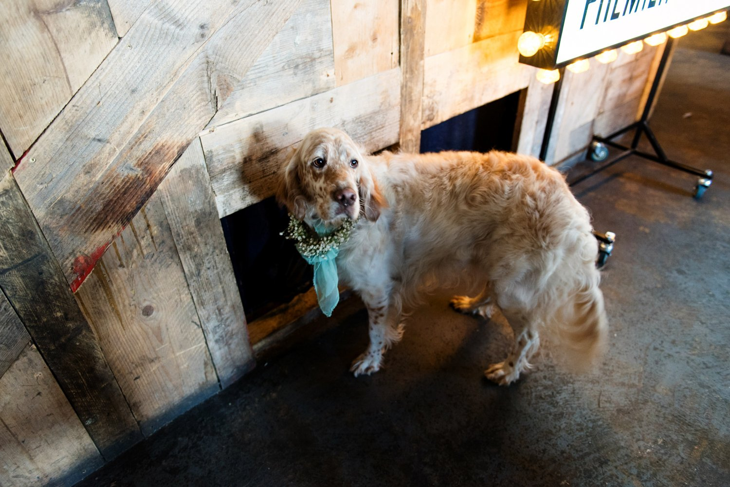 Cute dog at London warehouse wedding