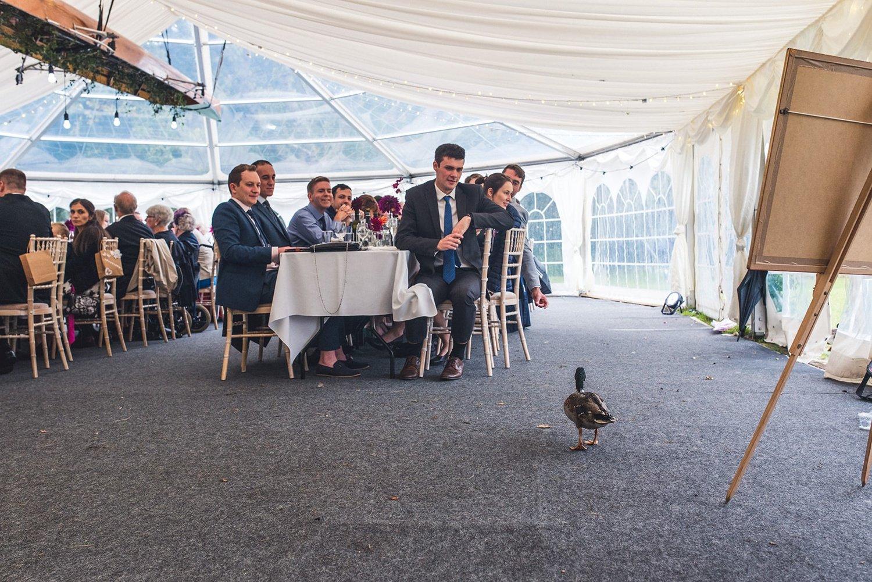 Duck at wedding Tournerbury Woods Estate Wedding